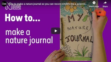How To Make A Nature Journal So You Can Record Wildlife Like A Scientist